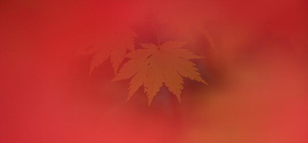 Zentsu Eguchi Creative Studio Azur | 写真家 江口善通 オフィシャルウェブサイト |トップ写真01